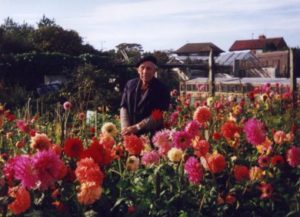 Photograph of Bill and his dahlias